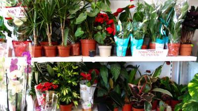Фото обьекта Цветочный магазин Цветы №206245
