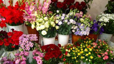 Фото обьекта Цветочный магазин Цветы №206246