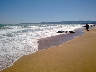 Фото обьекта Золотой пляж №221177