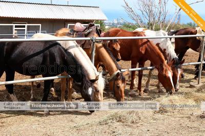 Фото обьекта Конные прогулки на Тепе-Оба №210635