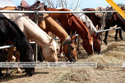 Фото обьекта Конные прогулки на Тепе-Оба №210636
