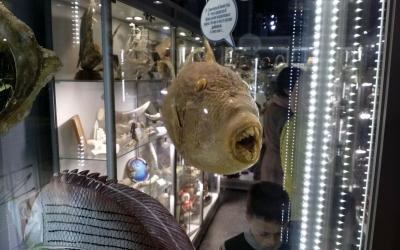 Фото обьекта Музей Рыбы и Рыболовства №219813