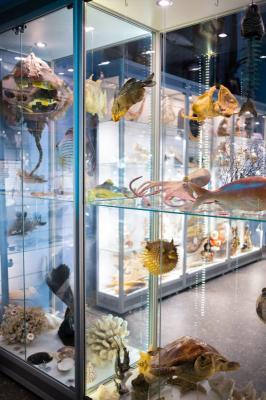 Фото обьекта Музей Рыбы и Рыболовства №219819