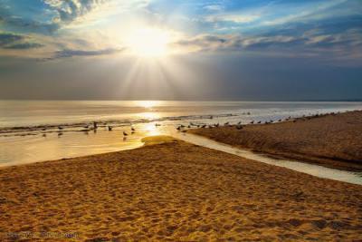 Фото Золотой пляж №167785
