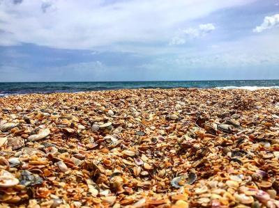 Фото Золотой пляж №167797