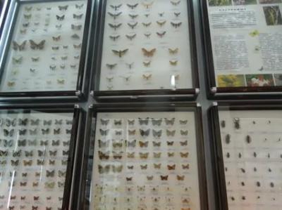 Фото обьекта Музей истории и природы Кара-Дага №218510