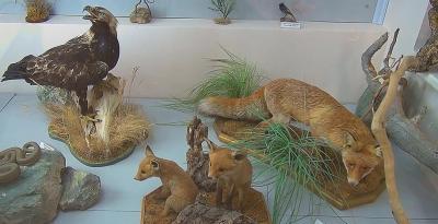 Фото обьекта Музей истории и природы Кара-Дага №218519