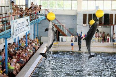 Фото обьекта Карадагский дельфинарий №149549