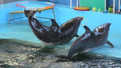 Фото обьекта Карадагский дельфинарий №219112