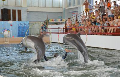 Фото обьекта Карадагский дельфинарий №219116