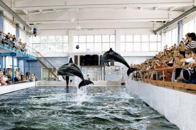Фото обьекта Карадагский дельфинарий №219119