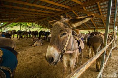 Фото обьекта Ослиная ферма